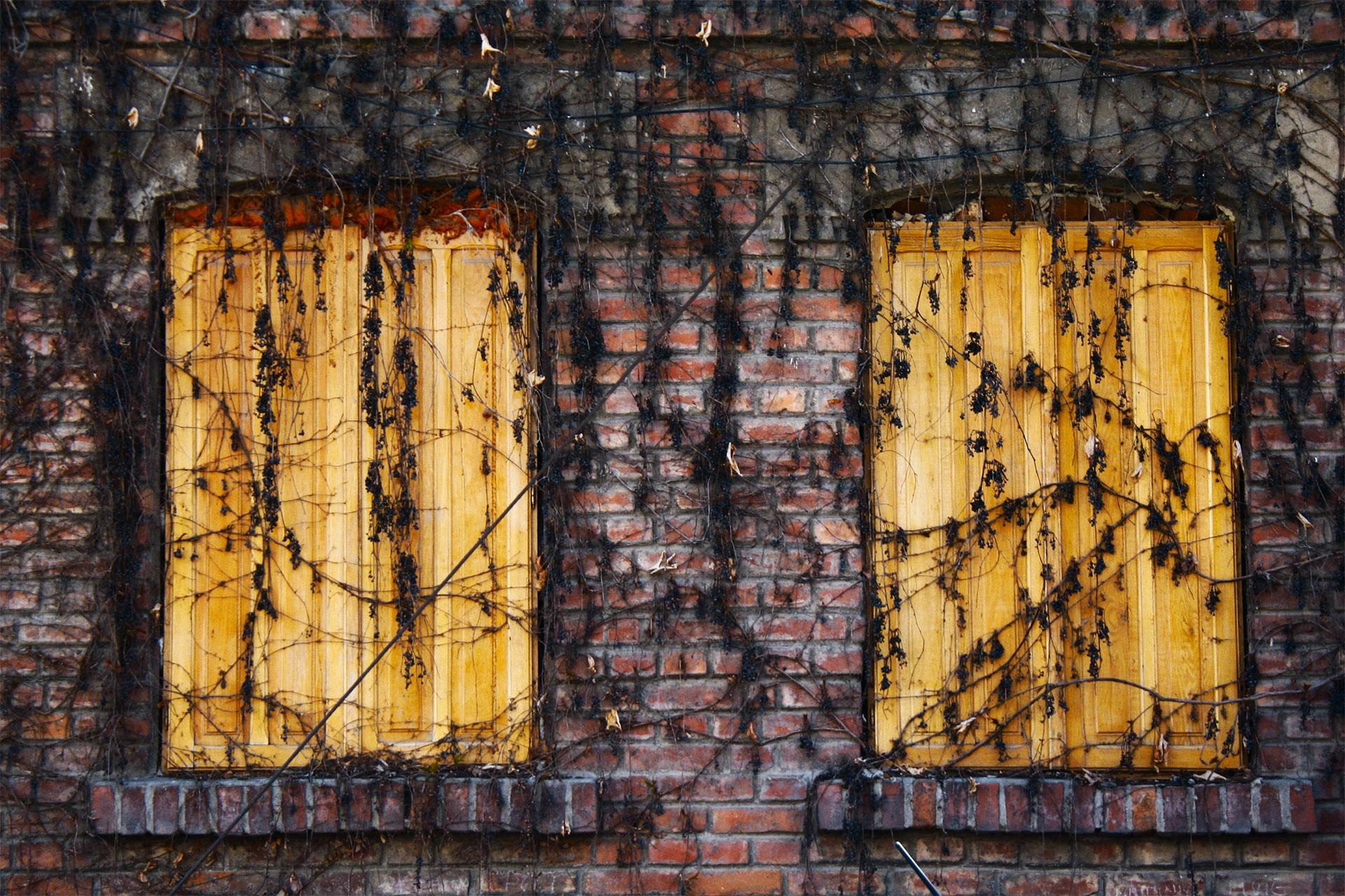 vines overgrowing shuttered windows
