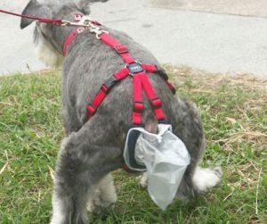 Dog pooping into bag