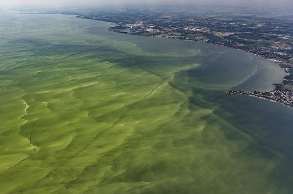 Lake Eerie Algae Bloom