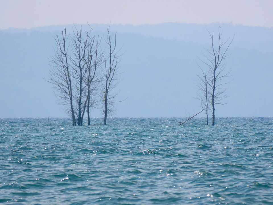 Trees submerged